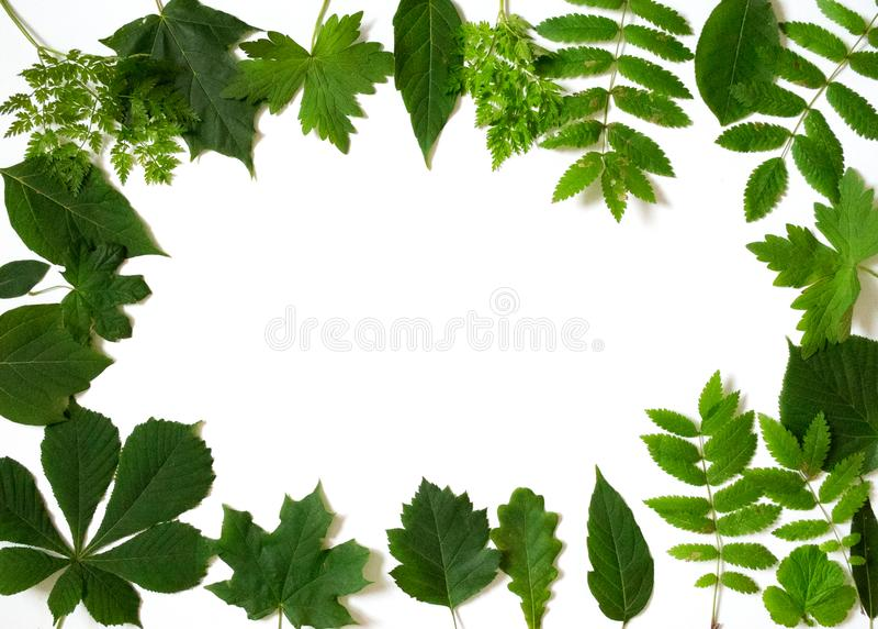 Muitas folhas verdes dispersadas no fundo branco foto de stock royalty free