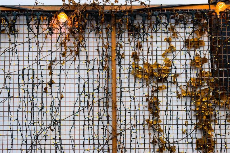 Muitas luzes conduzidas pequenas na parede branca com cerca e folhas do ferro Pouco fundo conduzido das luzes imagens de stock