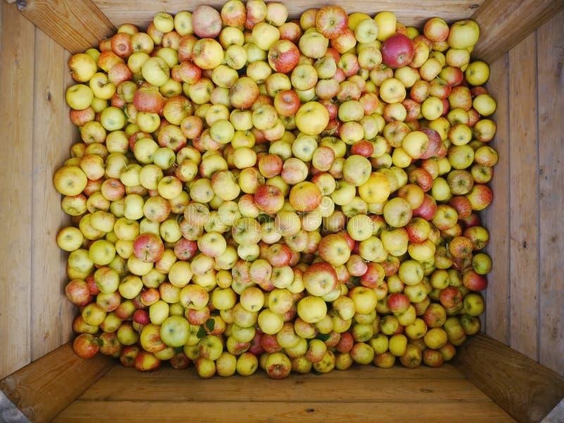 Muitas maçãs em umas caixas de madeira fotos de stock royalty free