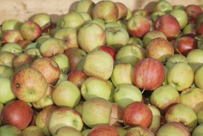 Muitas maçãs em umas caixas de madeira foto de stock