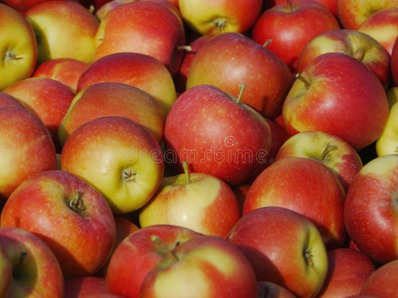Muitas maçãs em umas caixas de madeira imagens de stock royalty free
