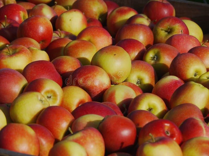 Muitas maçãs em umas caixas de madeira imagens de stock