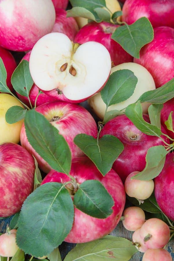 Muitas maçãs vermelhas fotos de stock royalty free