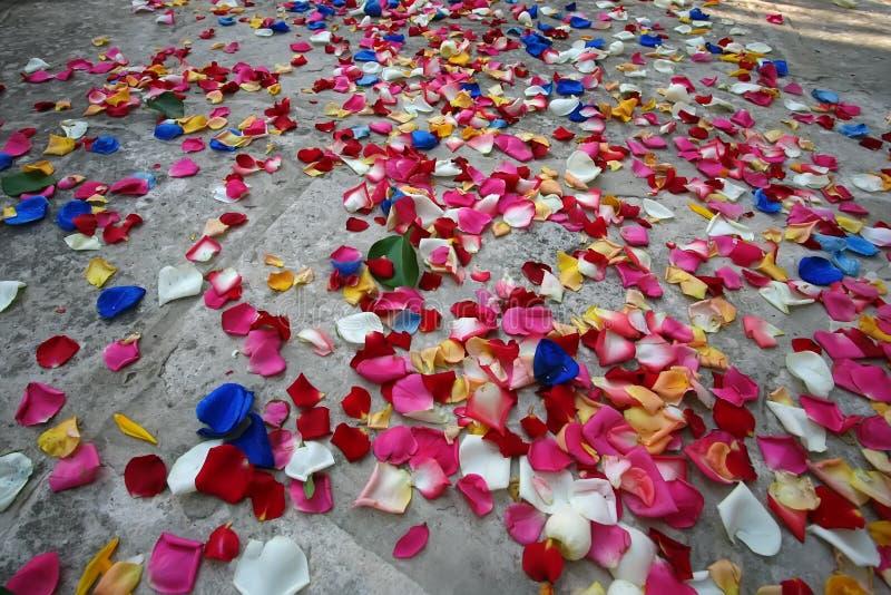 Muitas pétalas cor-de-rosa coloridos no asfalto fotos de stock