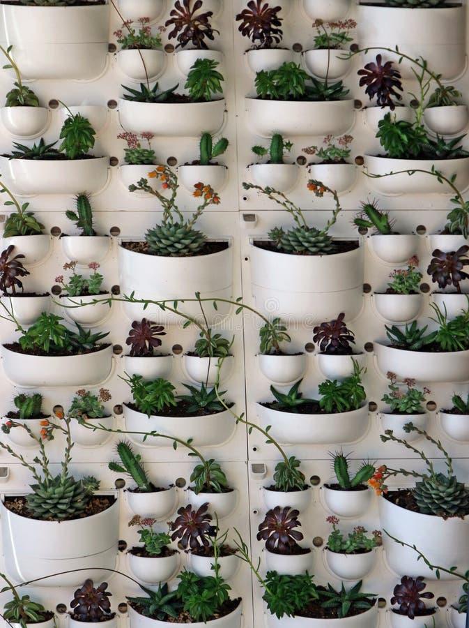 Muitas plantas suculentos em um plantador vertical plástico da parede imagens de stock royalty free