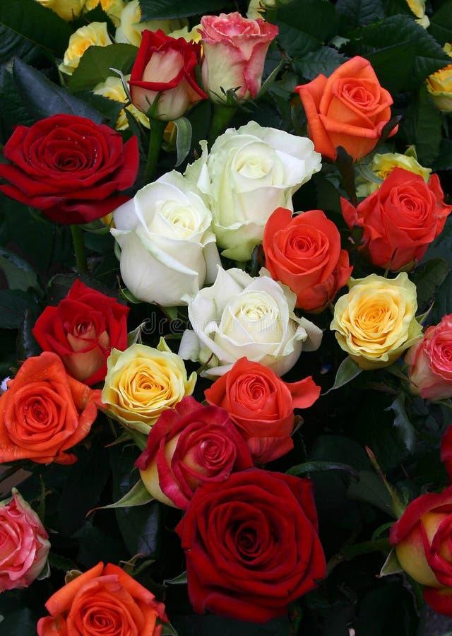 Download Muitas rosas foto de stock. Imagem de nosegay, lote, colorido - 542044