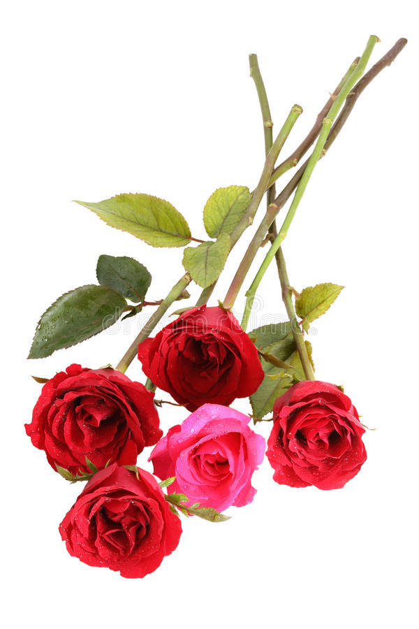 Download Muitas rosas vermelhas imagem de stock. Imagem de luxuriant - 26520465