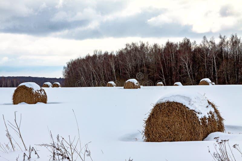 Muito feno redondo na floresta do inverno, encontrando-se sob a neve, uma agricultura rural da paisagem fotografia de stock