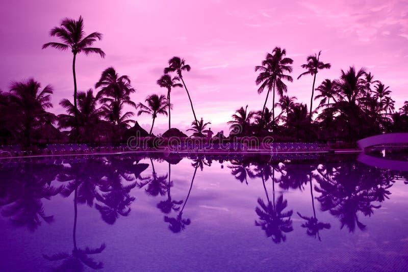 Muito palma preta em uma noite do roxo da praia da noite fotos de stock royalty free