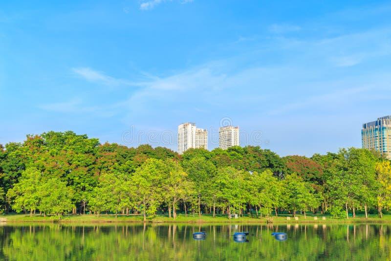 Muito parque da árvore em público com pântano e o céu brilhante fotos de stock