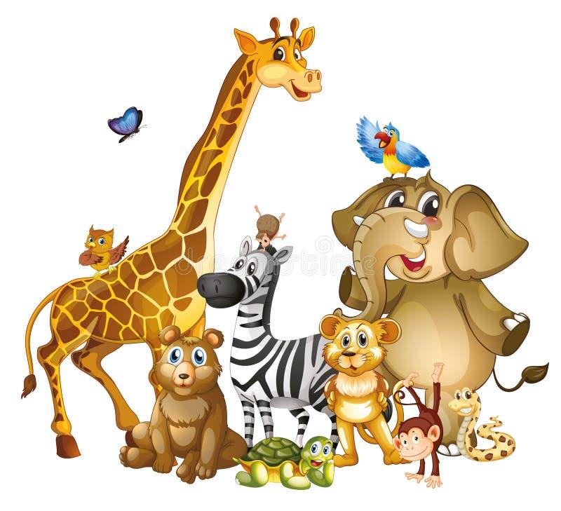 Muitos animais bonitos em fundo branco foto de stock