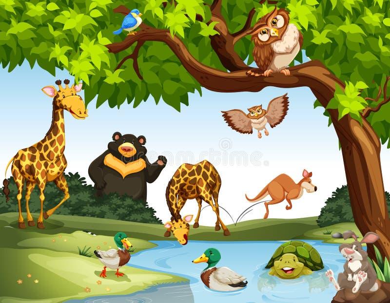 Muitos animais selvagens no parque ilustração royalty free