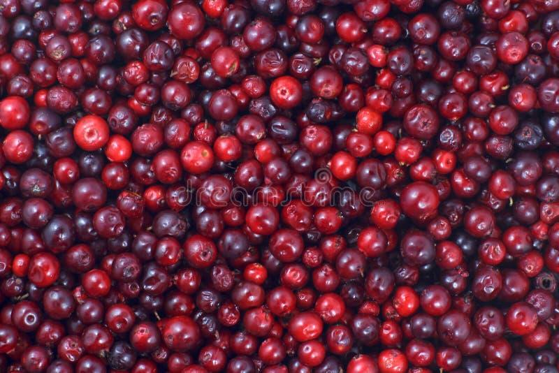 Muitos arandos que encontram-se para baixo na superfície horizontal Um fundo bonito do fruto fresco imagens de stock
