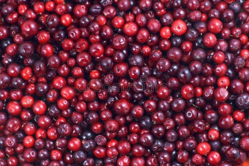 Muitos arandos que encontram-se para baixo na superfície horizontal Um fundo bonito do fruto fresco fotografia de stock royalty free
