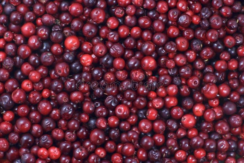 Muitos arandos que encontram-se para baixo na superfície horizontal Um fundo bonito do fruto fresco fotos de stock