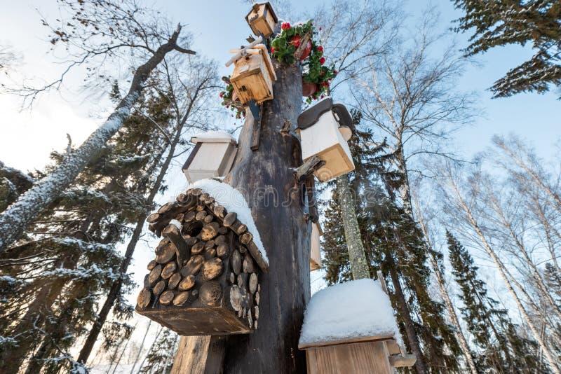 Muitos aviários, para pássaros e alimentadores na árvore Casas para pássaros no inverno sob a neve na árvore pássaro foto de stock royalty free