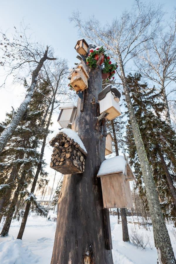 Muitos aviários, para pássaros e alimentadores na árvore Casas para pássaros no inverno sob a neve na árvore pássaro imagem de stock