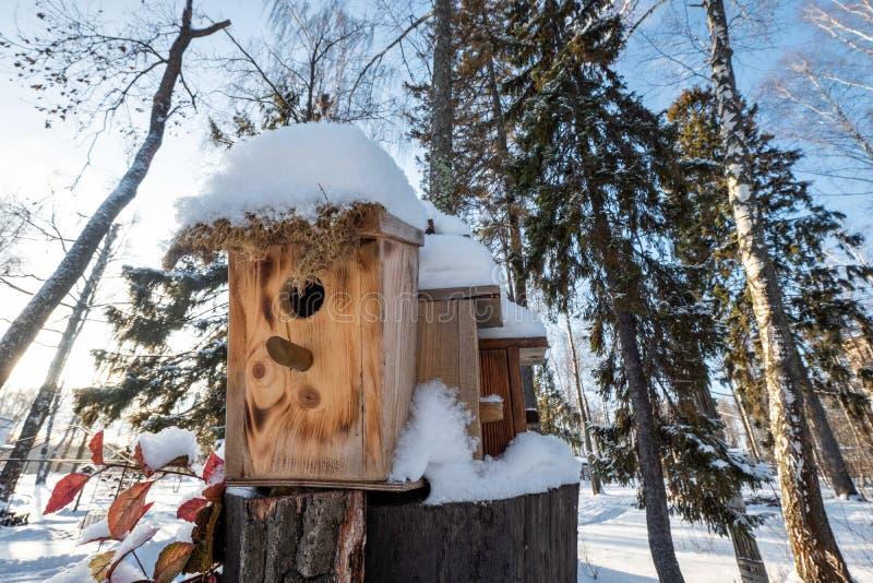 Muitos aviários, para pássaros e alimentadores na árvore Casas para pássaros no inverno sob a neve na árvore pássaro fotografia de stock