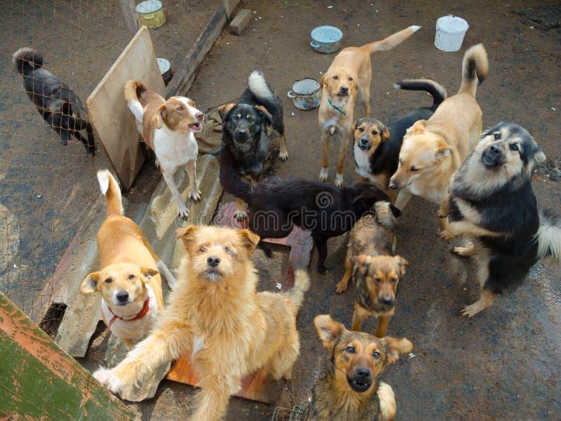 Muitos cães dispersos fotos de stock royalty free