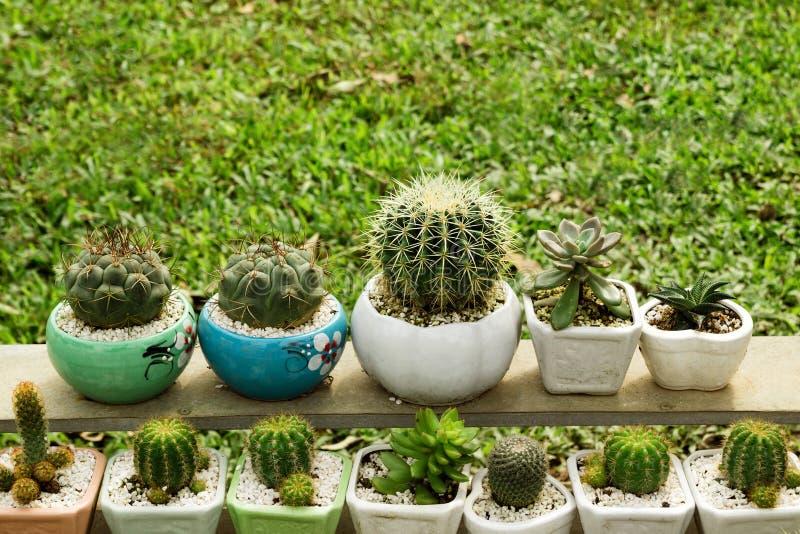 Muitos cactos e plantas carnudas em uns potenciômetros coloridos da planta foto de stock