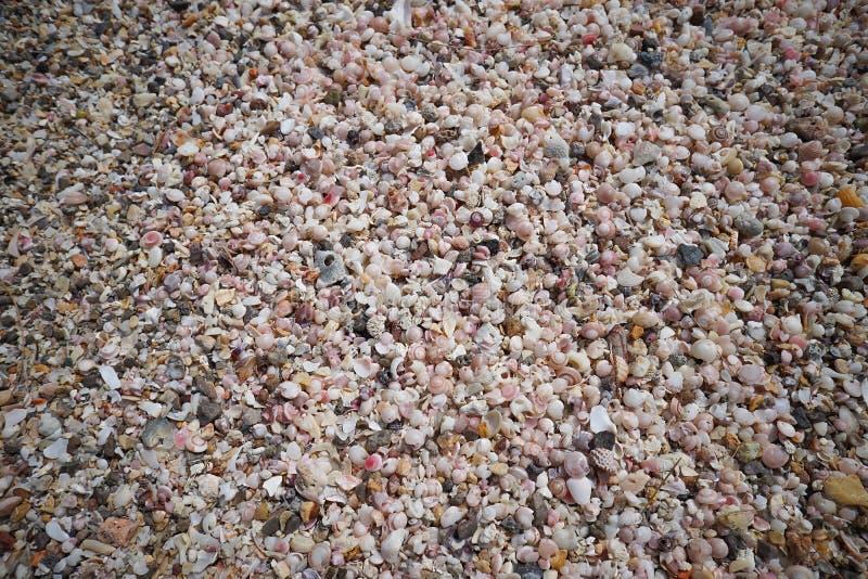 Muitos corais pequenos quebrados, sucata do shell do mar na areia em prachuapkhirikhan, Tailândia fotos de stock royalty free