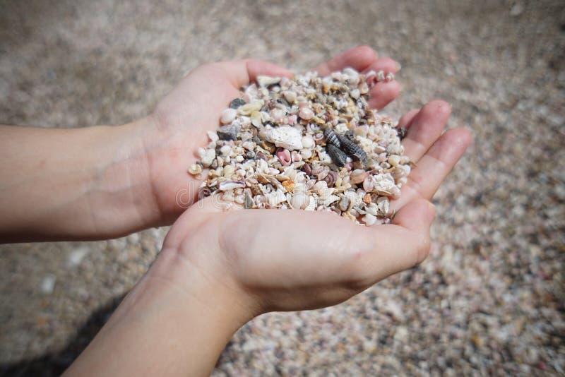 Muitos corais pequenos quebrados, sucata do shell do mar na mão dois com fundo do borrão fotografia de stock