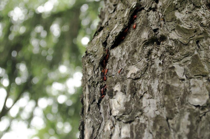 Muitos erros em uma árvore fotografia de stock royalty free