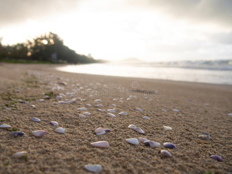 Muitos escudos que est?o na areia na praia fotos de stock