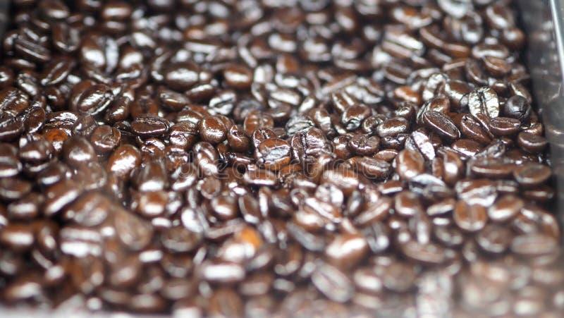 Muitos feijões de café da fonte excelente foto de stock