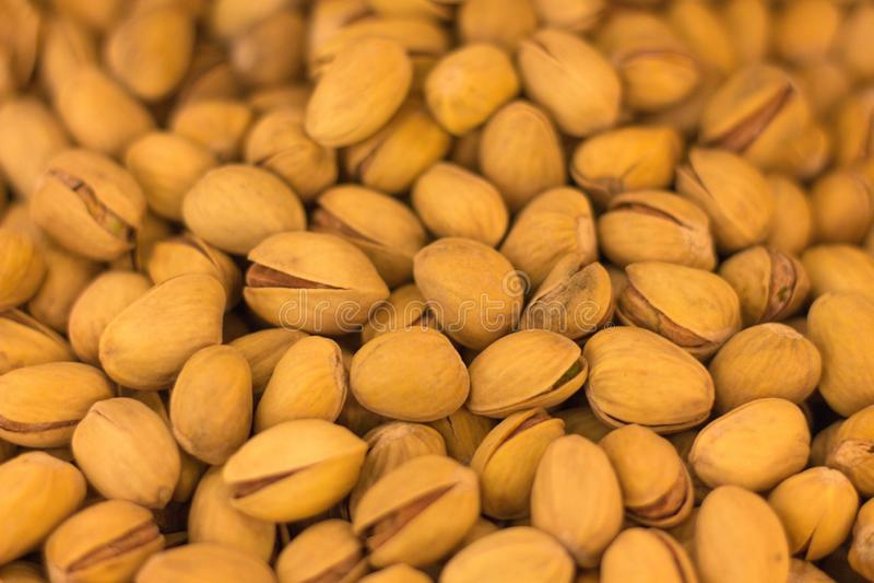 Muitos frutos do pistache estão prontos para o consumo Estão já levemente abertos para a acessibilidade fotografia de stock