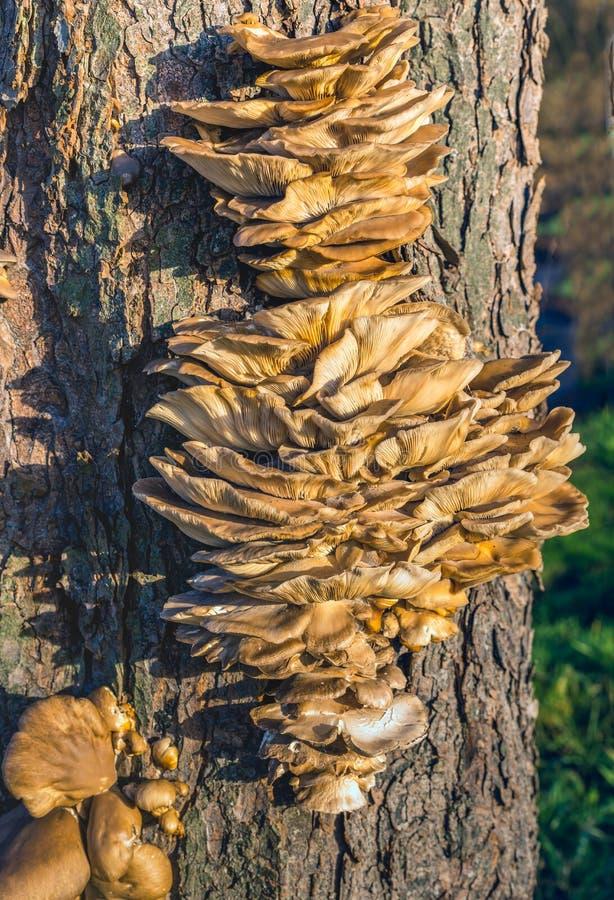 Muitos fungos pequenos junto na casca de uma árvore imagem de stock royalty free