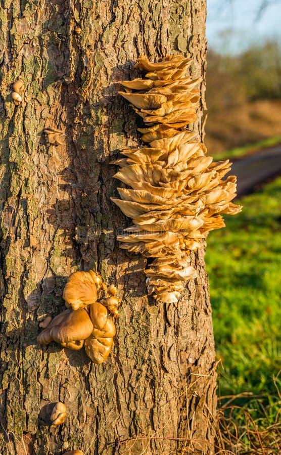 Muitos fungos pequenos junto na casca de uma árvore foto de stock