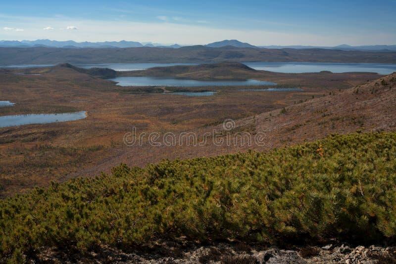 Muitos lagos pequenos e taiga inoperantes fotos de stock royalty free