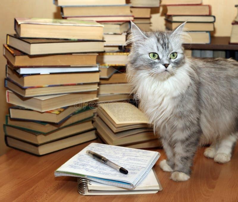 Muitos livros velhos e gato fotografia de stock royalty free