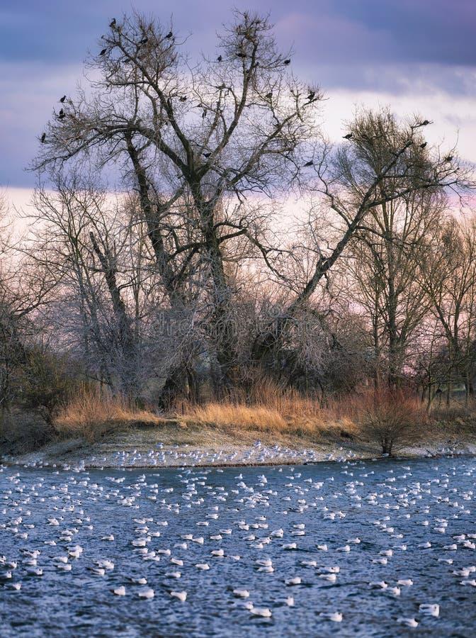 Muitos pássaros que descansam no lago imagens de stock royalty free