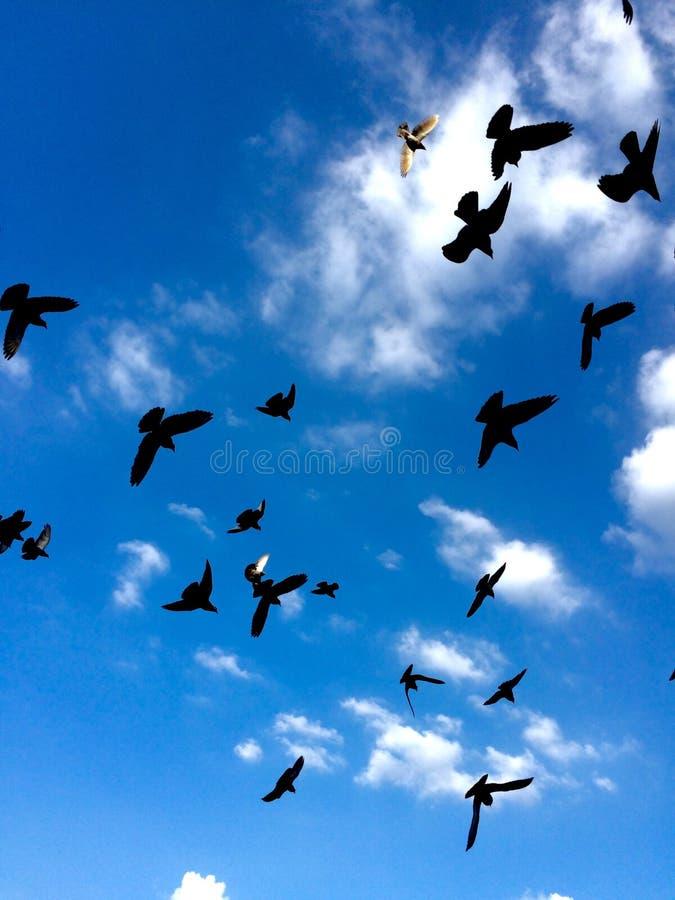 Muitos pássaros voam no céu fotografia de stock