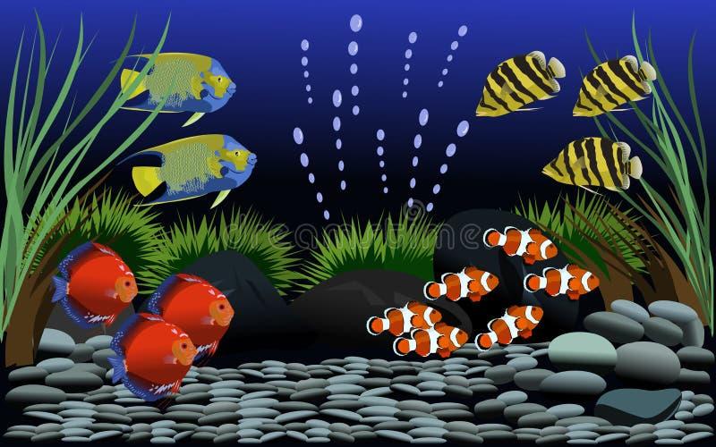 Muitos peixes bonitos no aquário com cascalho e em árvores pequenas decoraram ilustração royalty free