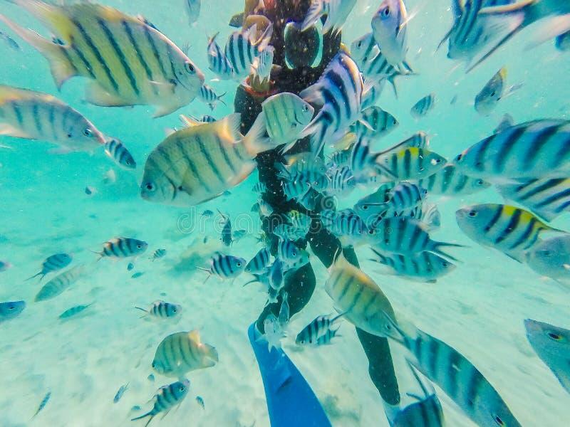 Muitos peixes do palhaço com o mergulhador que toma a foto debaixo d'água fotografia de stock royalty free