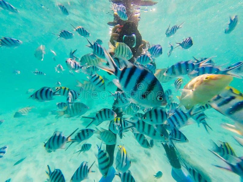 Muitos peixes do palha?o com o mergulhador que toma a foto debaixo d'?gua foto de stock