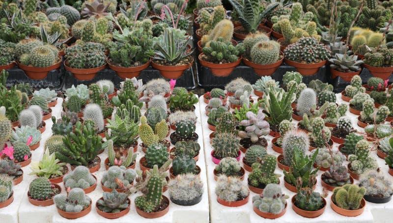 muitos plantas carnudas e cactos para a venda fotos de stock
