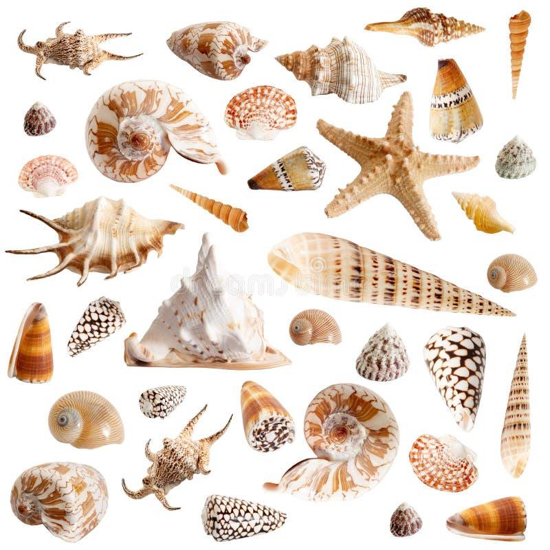 Muitos seashells fotografia de stock royalty free