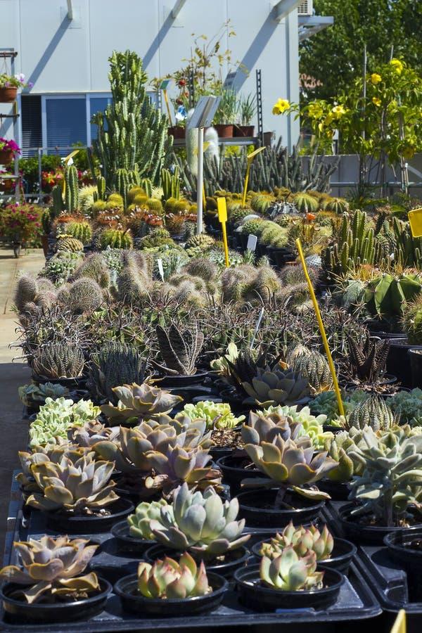Muitos tipos das plantas carnudas e dos cactos venderam no florista foto de stock