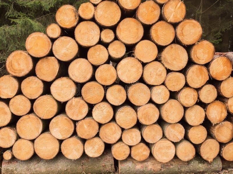 Muitos troncos de madeira empilhados foto de stock