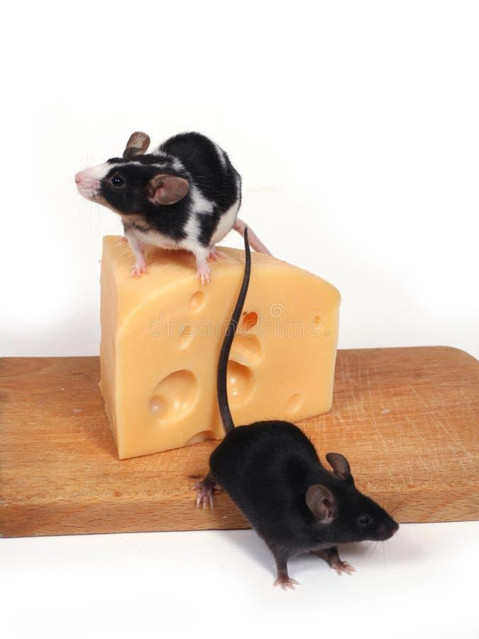 Muizen en kaas stock fotografie