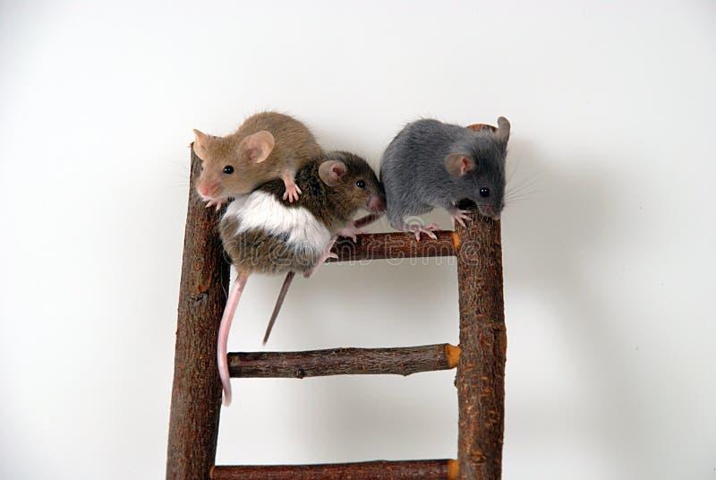 Muizen op stuk speelgoed trap royalty-vrije stock afbeelding