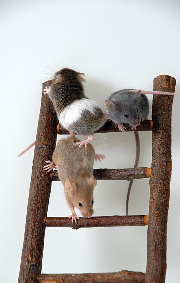 Muizen op stuk speelgoed trap stock foto