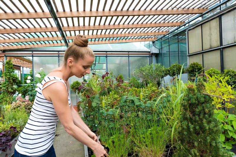 Mujer adulta joven que cultiva un huerto en un invernadero foto de archivo