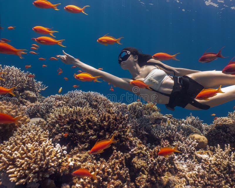 Mujer asiática freediving en sorprender el arrecife de coral vivo foto de archivo
