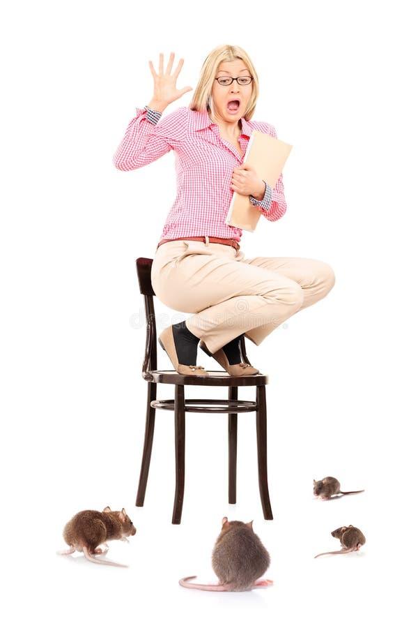 Mujer asustada que se coloca en silla durante una invasión de la rata imágenes de archivo libres de regalías