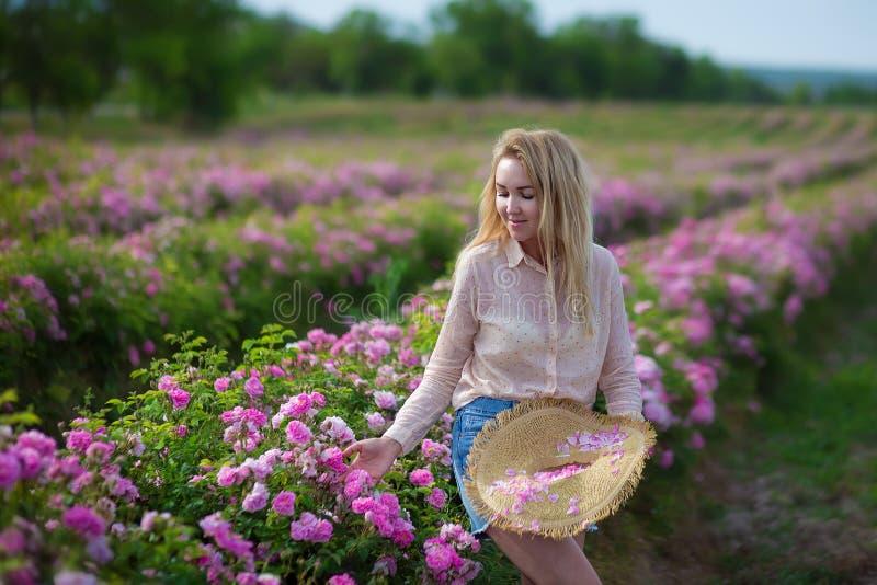 Mujer blanda joven bonita que camina en el campo de las rosas de té Los vaqueros que llevan de la señora rubia y el sombrero retr fotos de archivo libres de regalías